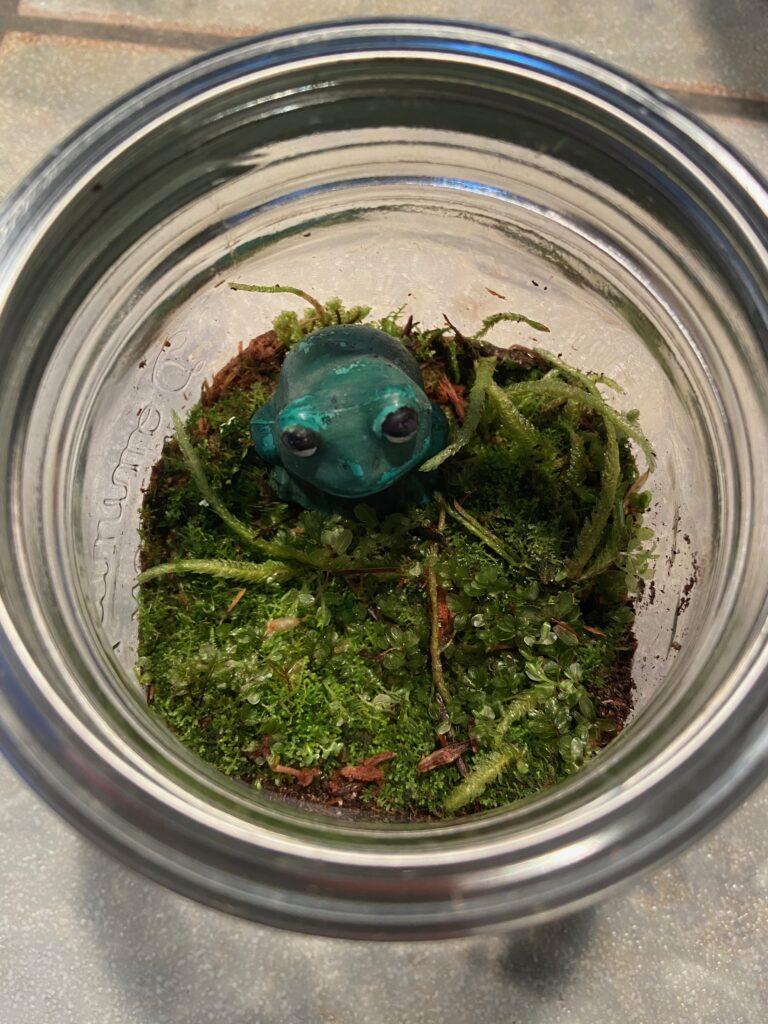 Upcycled Mason Jar Terrarium - 2
